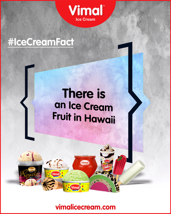 That's right. There's a Hawaiian fruit that tastes exactly like vanilla ice cream. It's called the Inga Feuillei, but locals call it the ice cream bean. It grows on perennial trees in hot climates, and it is enjoyed in many different ways by locals.   #IceCreamFact #IcecreamTime #IceCreamLovers #FrostyLips #Vimal #IceCream #VimalIceCream #Ahmedabad #Gujarat #India